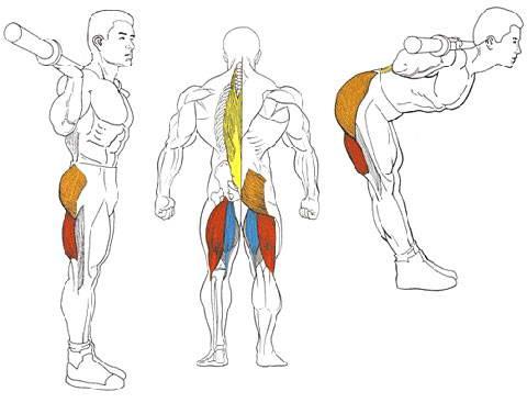 Наклоны со штангой на плечах для мышц спины
