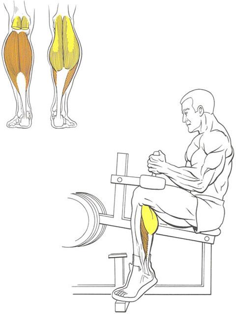 Подъемы на носки сидя для ног