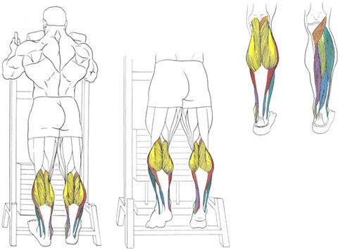 Подъемы на носки стоя для ног