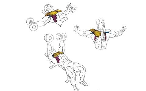 Разведение гантелей лежа для мышц груди