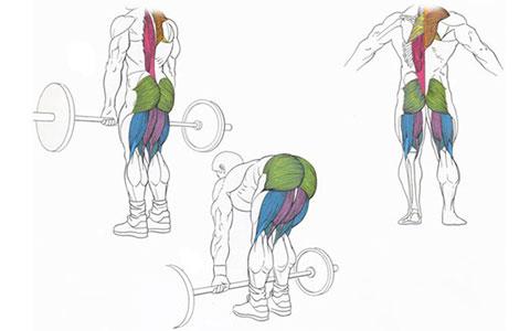 Становая тяга для мышц спины
