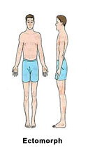 Эктоморфный тип телосложения