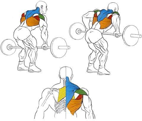 Тяга штанги в наклоне для мышц спины