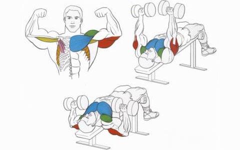 Жим гантелей на скамье с наклоном вниз для мышц груди