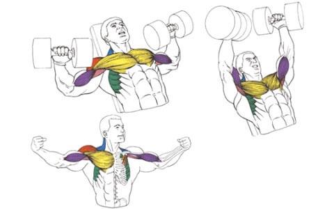 Жим гантелей на скамье с наклоном вверх для мышц груди