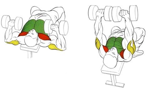 Жим гантелей лежа для мышц груди