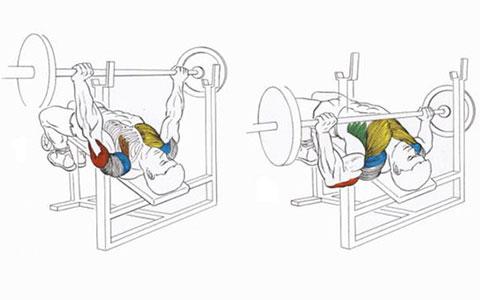 Жим штанги на скамье с наклоном вниз для мышц груди