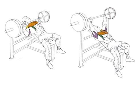 Жим штанги на скамье с наклоном вверх для мышц груди
