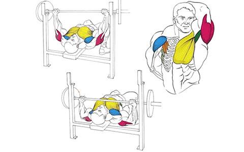 Жим штанги лежа для мышц груди
