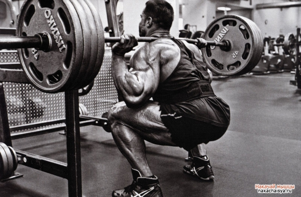 Тазобедренная мышца