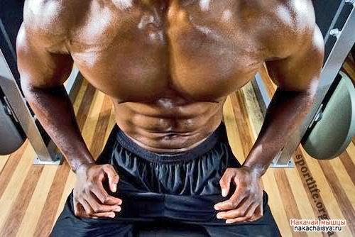 Секреты мышечного роста