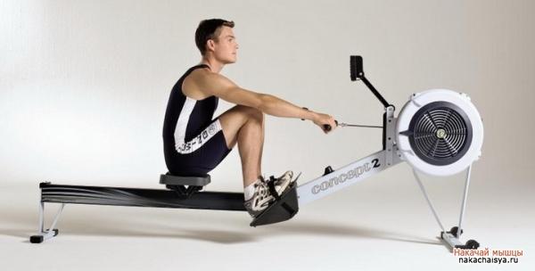 Мышцы с гребным тренажером