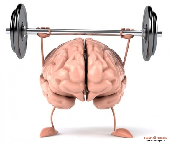 Влияние фитнеса на работу мозга